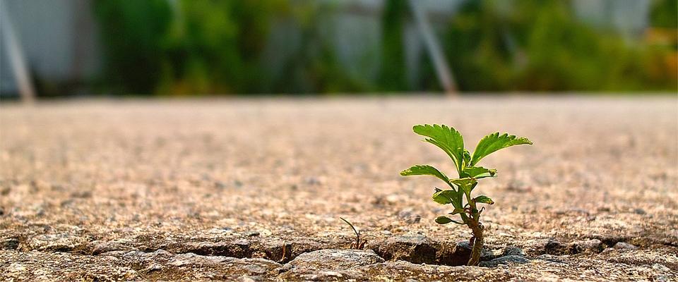 crescimento-espiritual-fe-em-jesus
